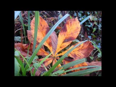 Paolo Nutini  - Autumn Leaves