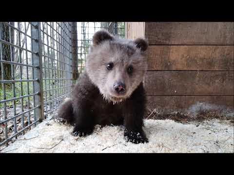 И еще один медвежий сирота, УЖЕ ШЕСТНАДЦАТЫЙ!