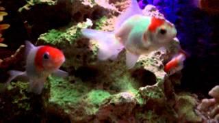 Aquarium ikan hias semarang