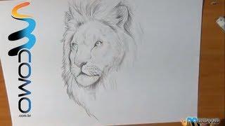 Como desenhar um leão realista