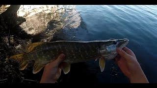 Pêche du Brochet aux leurres #3 GoPro HD