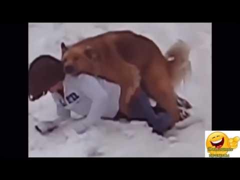 ютуб видео приколы с животными