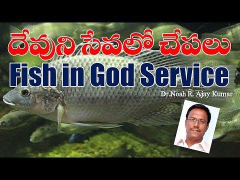 దేవుని పరిచర్యలో చేపలు -  Fish in God service - Dr.Noah R.Ajay Kumar