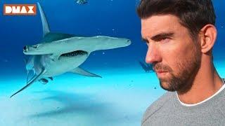 Phelps Köpekbalığına Karşı