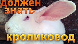Разведение кроликов для начинающих - 50 советов кролиководу!