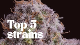 Top 5 Strongest Strains of 2019