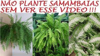 Nunca mais Plante Samambaias sem ver esse Vídeo