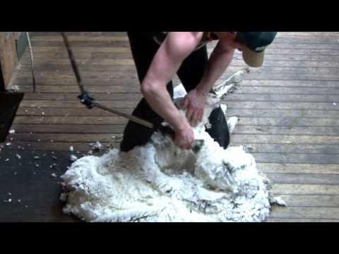 "Shearing a  Merino - ""Sheep Station NZ"" taster 09"