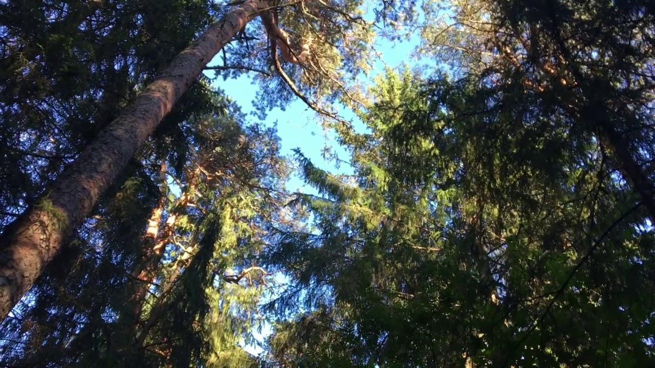 Filosofía en el bosque 25. Patrones 2. Las raíces del cielo.