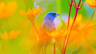 Beautiful Relaxing Hymns, Peaceful Instrumental Music, \\\x22Wednesday Morning Sunrise\\\x22 By Tim Janis