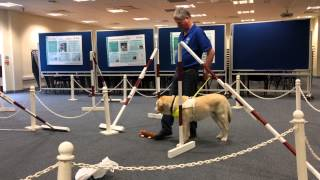 Guide Dogs Visit Day At The Vet School