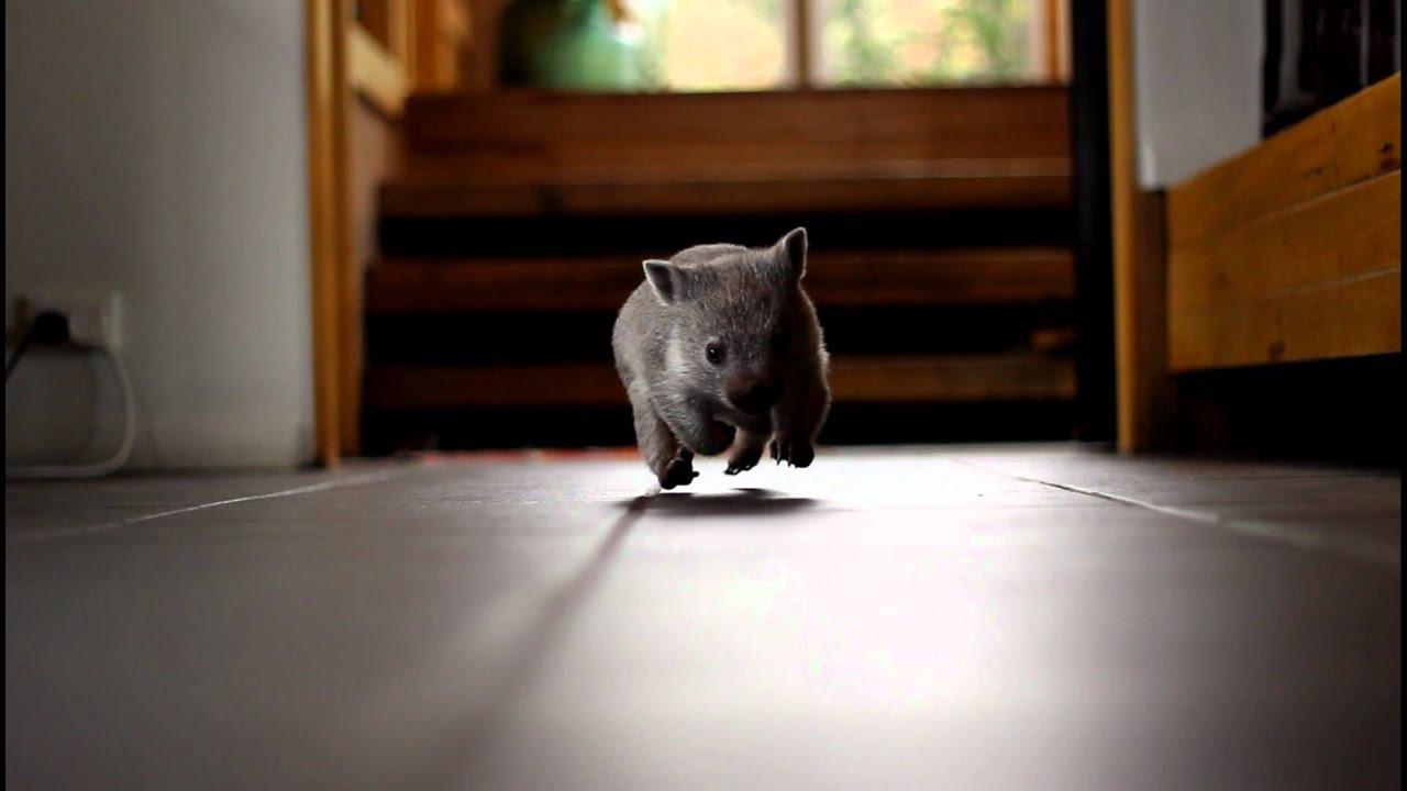 don t pat the wombat pdf