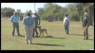 The Doghouse Llc Bh - Dog Training