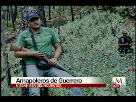 Amapoleros de Guerrero Reportaje de Milenio