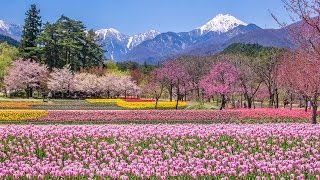[ 4K UltraHD ] 国営アルプスあづみの公園 - Alps Azumino National Park in Spring - (shot on Samsung NX1)
