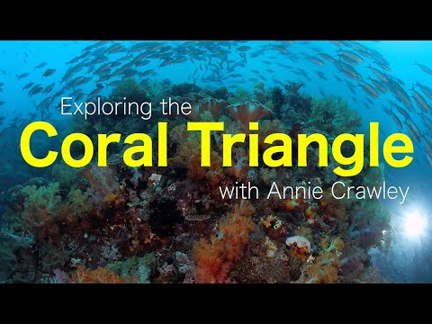 The Coral Triangle