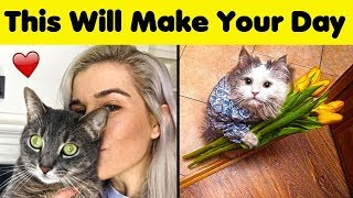 Cute Cat Photos That Will Make Your Day 😼❤️️