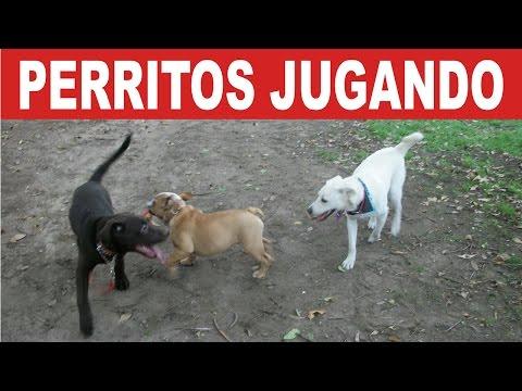 Dos perritos jugando en el Park Way de la Soledad | Tu Mascota TV