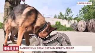 В Кольцово собак научили вынюхивать деньги