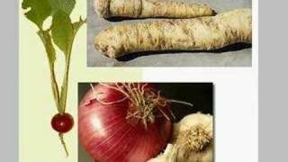 Free Natural Asthma Attack Home Remedies Illustrated