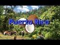 Adventures in Puerto Rico: Vlog 2