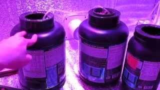 Гидропонная система глубоководных культур своими руками DWC ДВЦ(Гидропонная система. Собрал гидросистему из черных банок. В крышке просверлено отверстие под стаканчик,..., 2015-10-29T16:40:53.000Z)