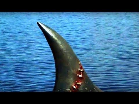 Download Sharkenstein - Bande Annonce