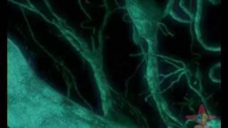 Video Sinapse - JA 26/01/08