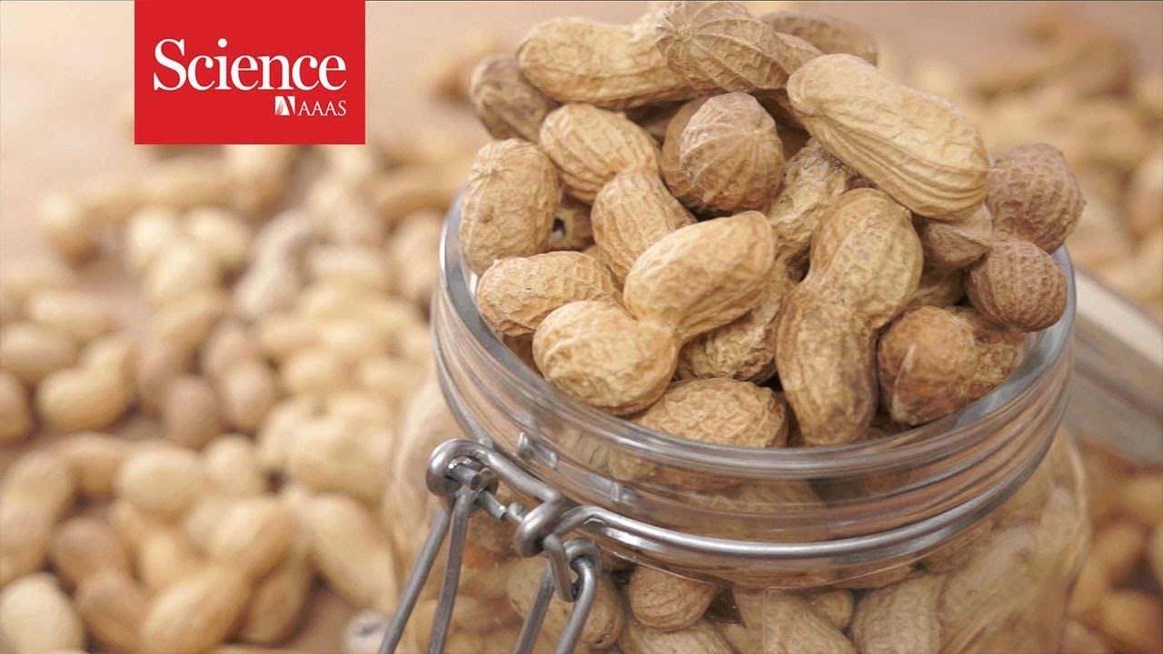 A revolutionary treatment for allergies to peanuts and other