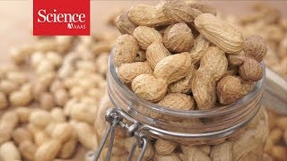 A revolutionary treatment for allergies to peanuts and other foods