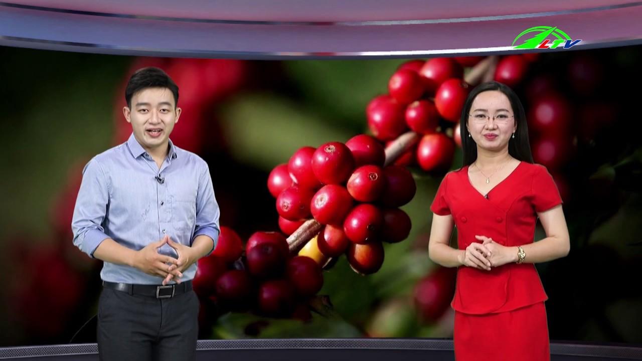 Giá cà phê  tăng cao kỷ lục    Lâm Đồng TV