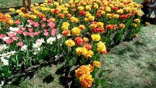 Прогулка в Дендропарке 29 апреля 2018 год. Большое разнообразие тюльпанов и аттракционов.