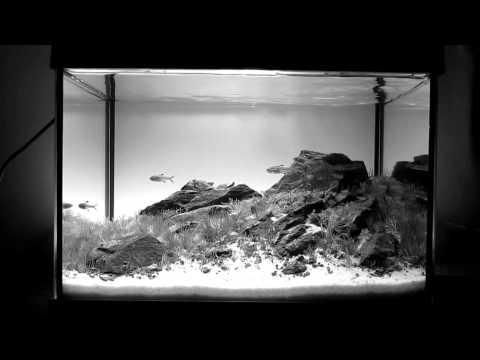Serenity - Aquascape - 20 liters HD - Ionut Godea