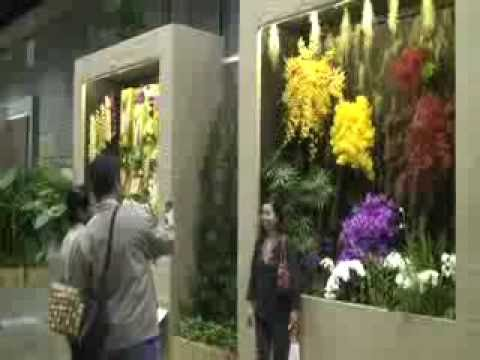 Lihat Lihat Festival Taman Dan Bunga Anggrek Di Singapura 2010