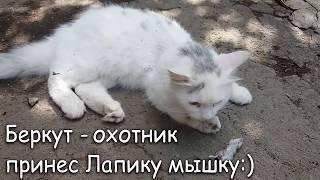 #46 Сделали рентген НАЗНАЧИЛИ ДЕНЬ ОПЕРАЦИИ Лапусик лечение перелома у кота