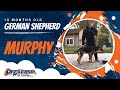 10 Month old Murphy, German Shepherd l Off Leash Puppy Training l E Collar Training of Northern VA