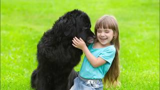 How to Choose the Best Dog Breed for Your Kids  Family Friendly Dogs Mascots for Children & Babies