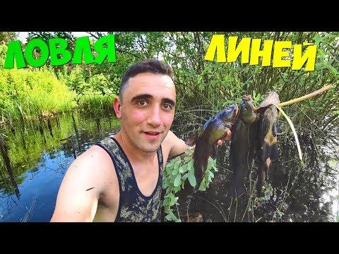 Ловля линей руками на болоте. Жареный ленок с овощами.