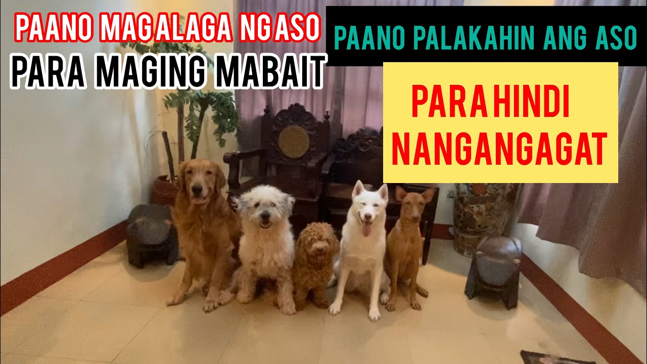 Dog training para hindi maging Agresibo ang Aso