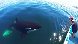Unique Orca encounter in the Sea of Cortez...Bahia de los Angeles, Mexico. thumbnail