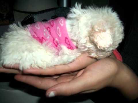 mi nueva cachorra: HANNAH :D