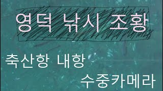 [낚시조황] 일주일전 영덕 축산항 내항 수중카메라