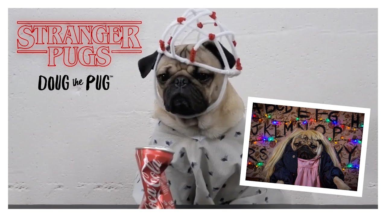 Stranger Pugs - Doug The Pug - YouTube