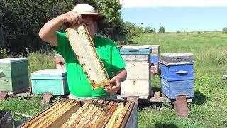 Всё,  главный взяток кончился, когда качать мёд?