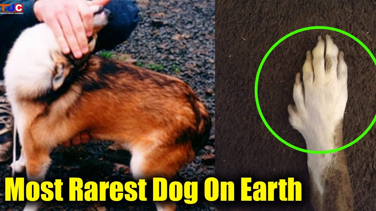 MOST RAREST DOG BREED ON EARTH!!😲😲