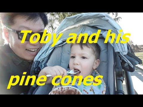 Toby And His Pine Cones