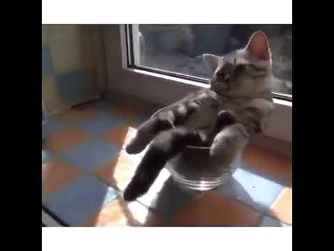 اقصر فيديو مضحك  قطط مضحكة