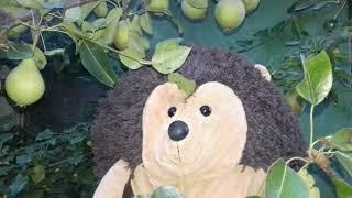 Ёжик Фуфуня гуляет вечером по саду - что растёт в саду - познавательное видео для детей