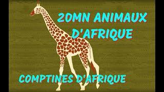 20 mn Animaux d'Afrique
