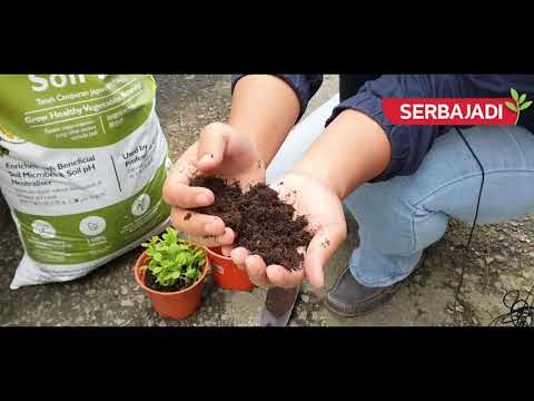 What is Japanese Soil Mix? Which garden soil is suitable for my plants??